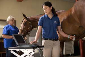 equine ultrasonic diagnostic