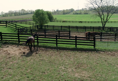 Genesee Valley Equine Clinic | Genesee Valley Equine Clinic